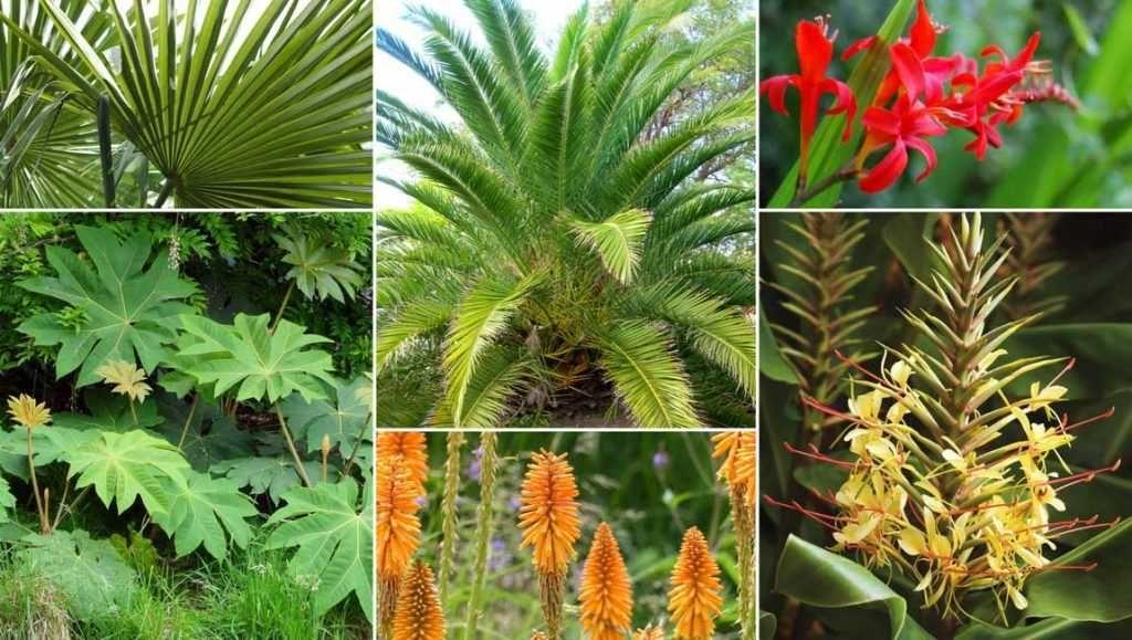 Les palmiers : planter, cultiver et entretenir | Palmier de jardin, Jardin exotique, Palmiers