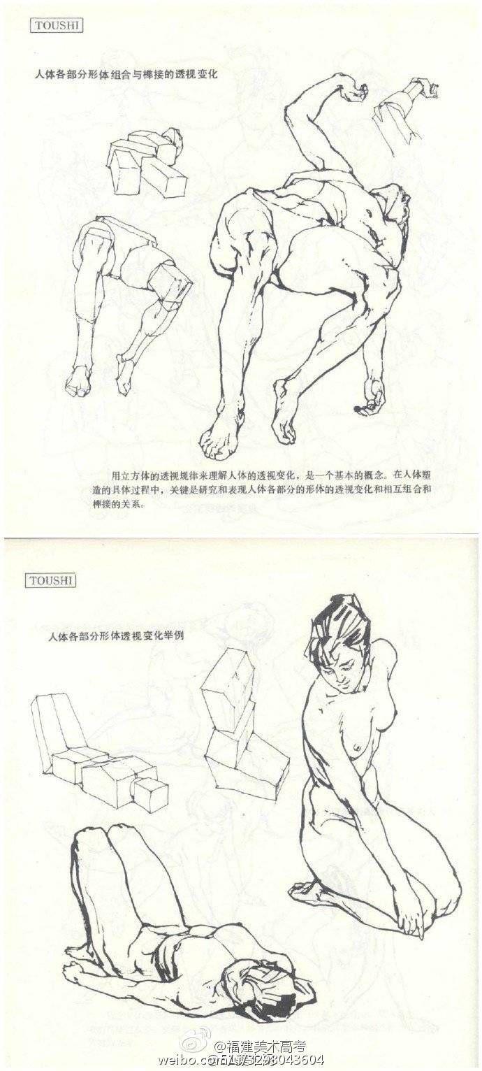 Pin de Tomas Camputaro en estructura   Pinterest   Anatomía, Dibujo ...