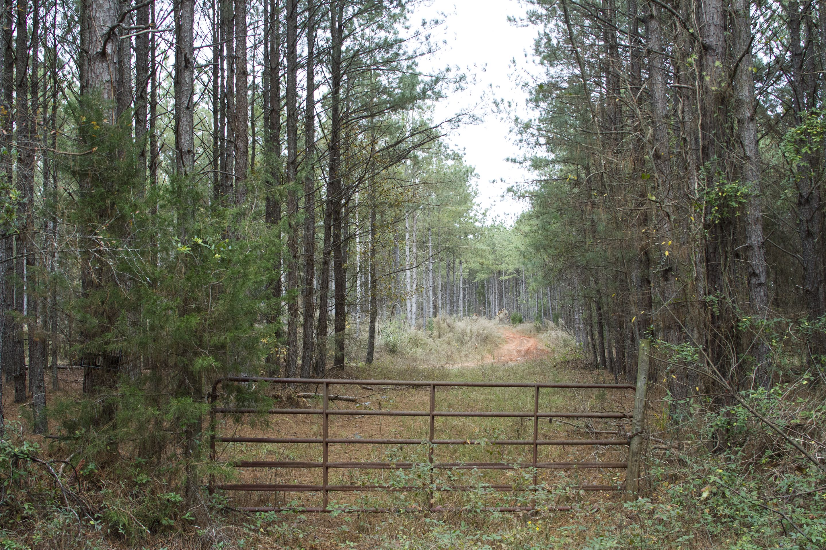 190 Acres Of Farm Tree Land For Sale In Comer Georgia Land Century Land For Sale Selling Real Estate Residential Land