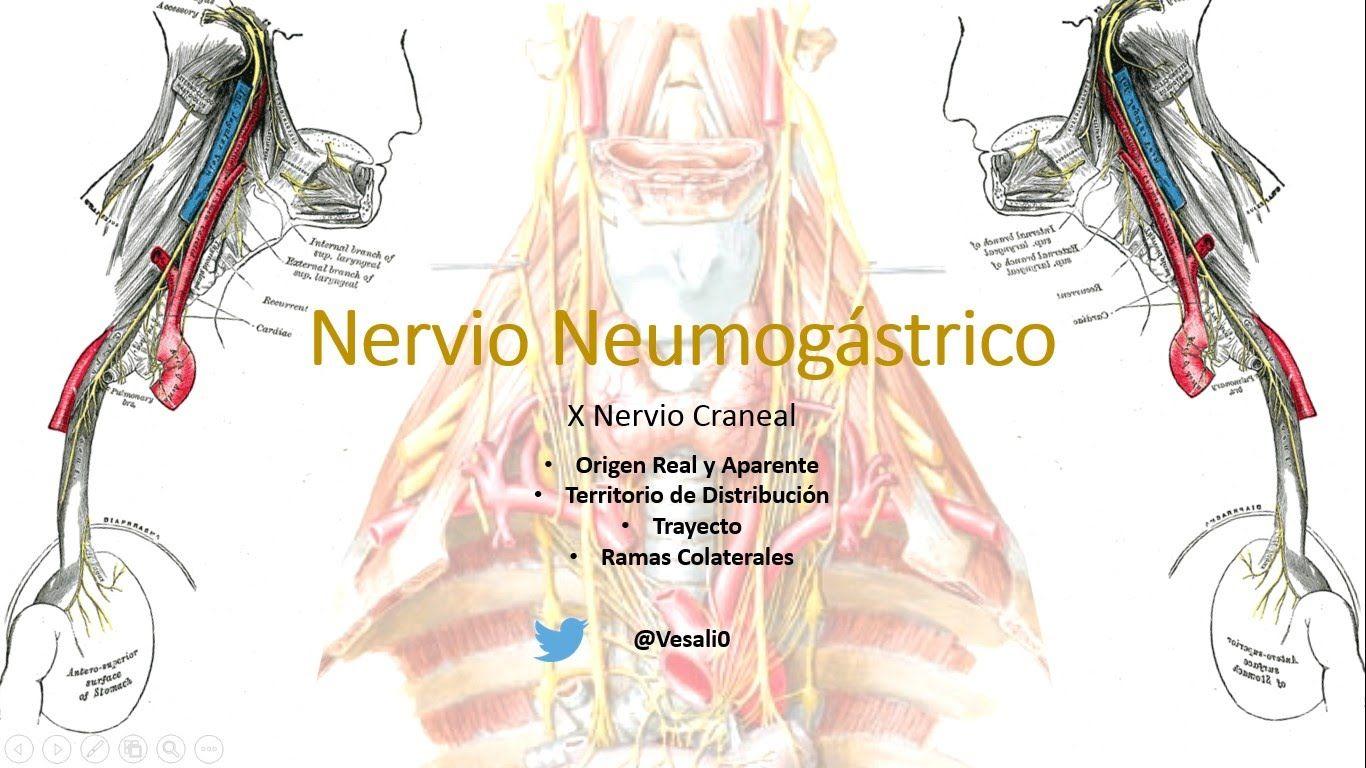 Anatomía - Nervio Vago (Origen Real, Aparente, Trayecto y Territorio ...