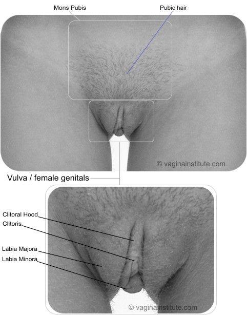 of vulva View