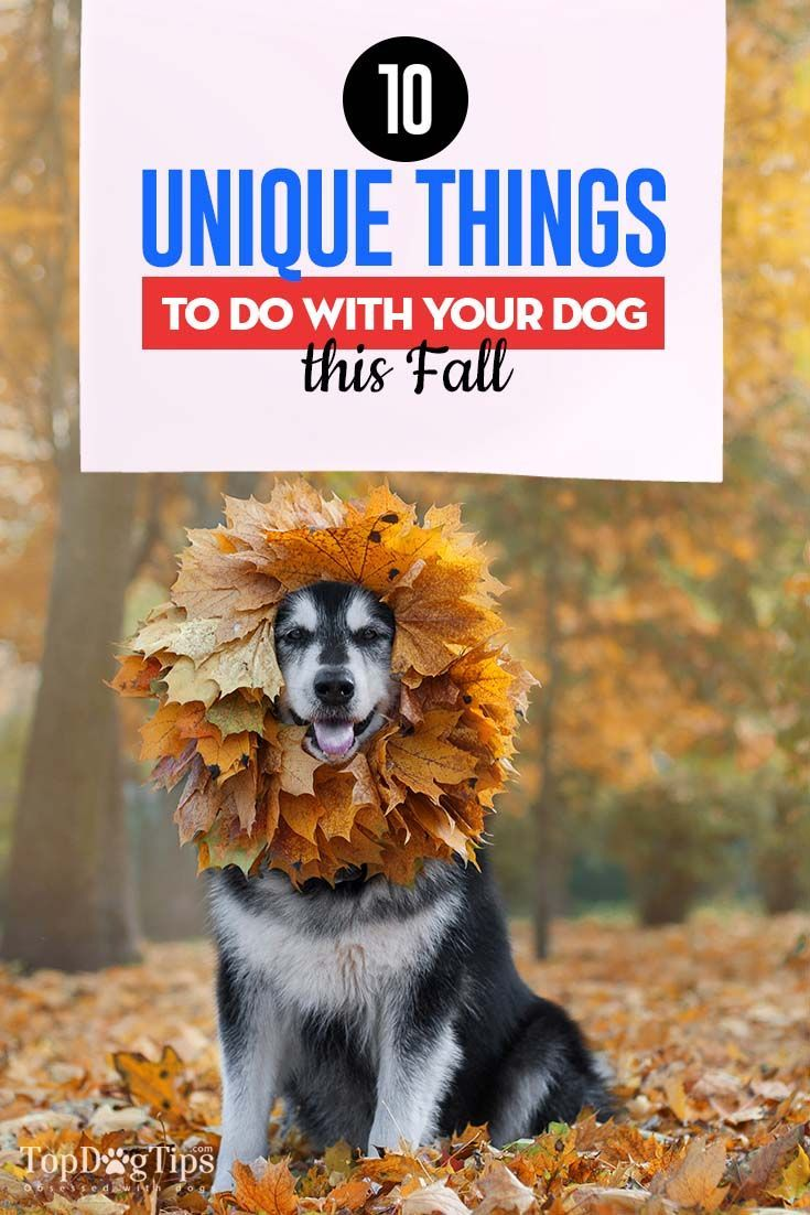 10 Unique Things to Do With Your Dog this Fall Your dog