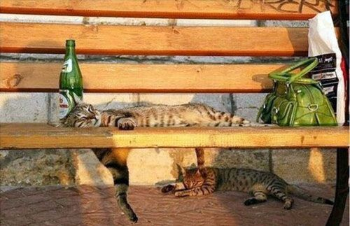 25 Awkward Cat Sleeping Positions: #26-50- drunk cats, copy kitten, and facsimile cat are my favorites.