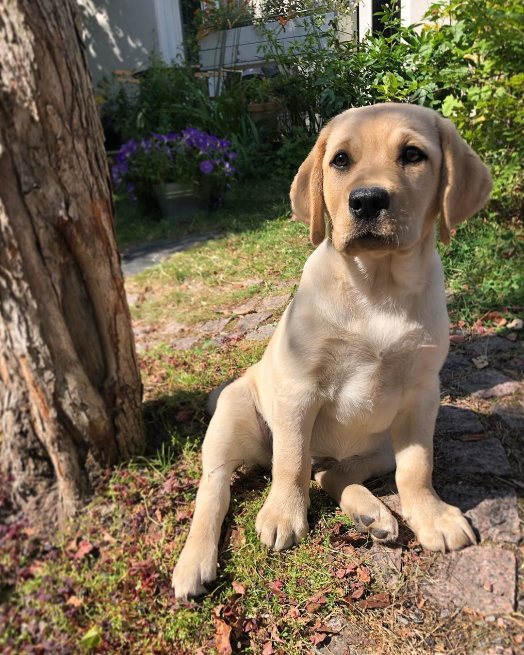 If You Love Labradors Visit Our Blog Labrador Labradorretriever