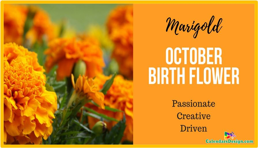 October Flowers Images And Pictures October Birth Flowers