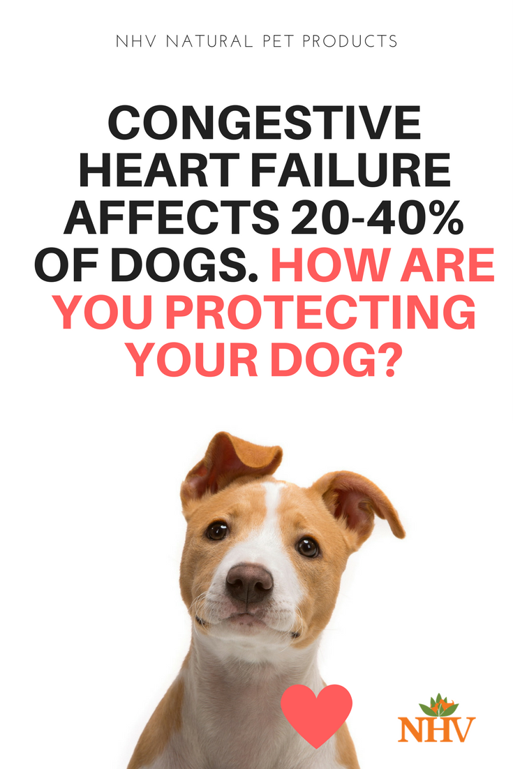 Did You Know That Over 10 Of Animals Have Some Form Of Cardiovascular Disease Or That Congestive Heart F Heart Failure Congestive Heart Failure Heart Disease