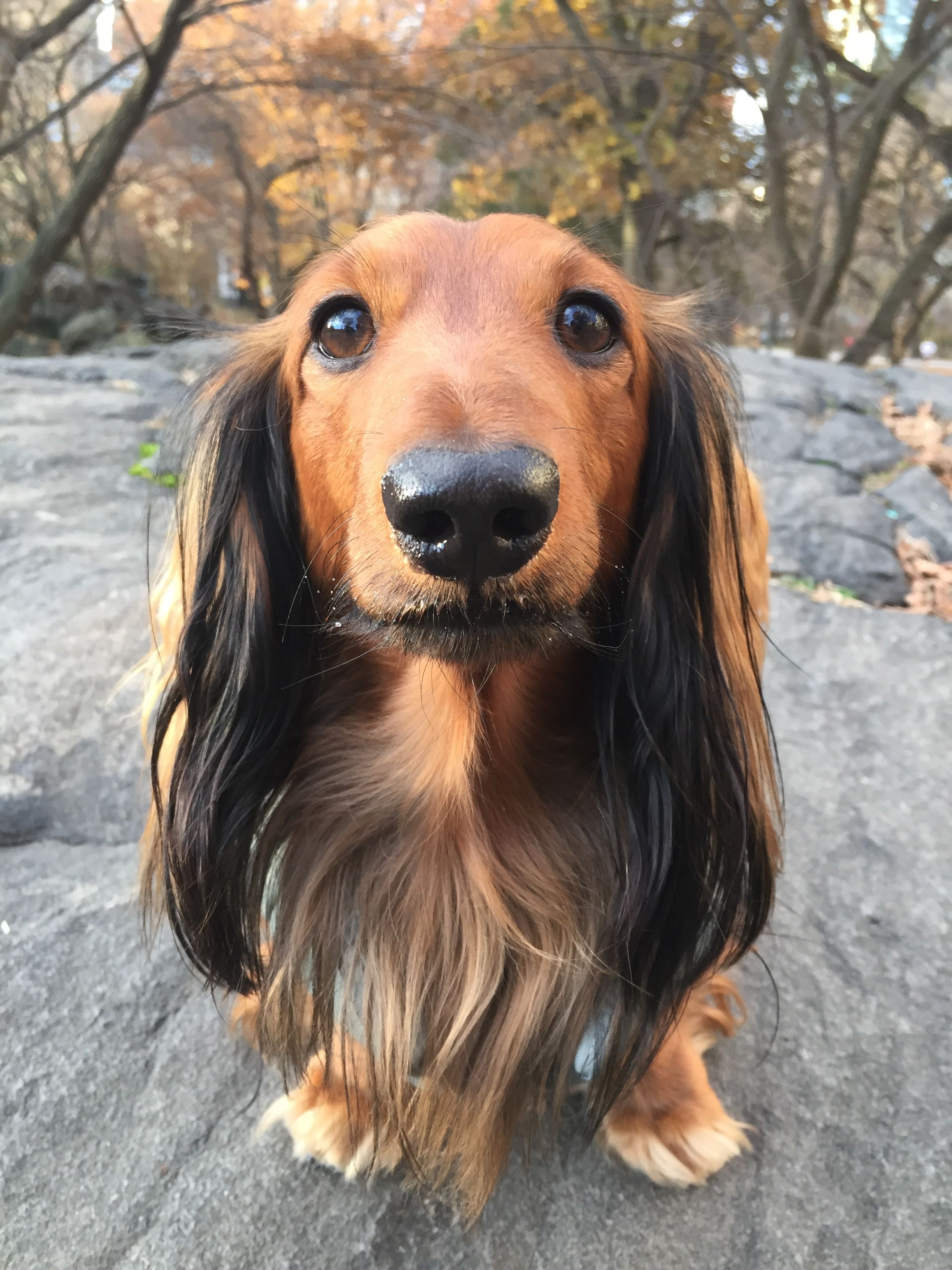 Djangothegent Is Staying Warm In Central Park Nyc In His Django