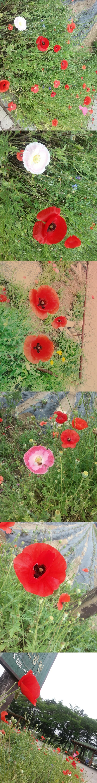 Seoul zoo 2014.6.13  국립현대미술관 가는길에 찍었당