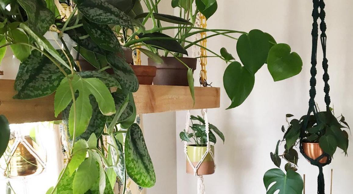 15x Eucalyptus Huis : Planten en bloemen archives roomed plantenkamerdromen