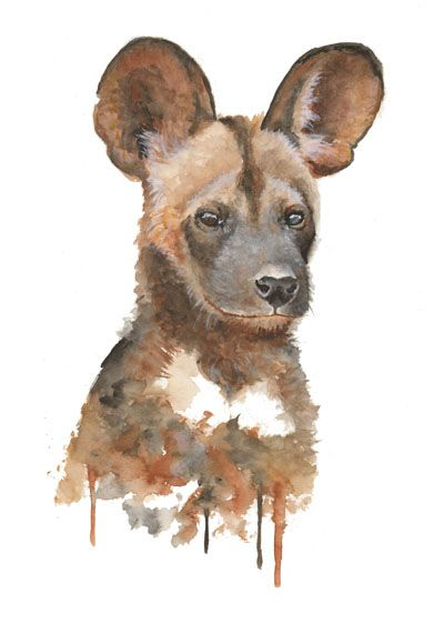African Wild Dog By Colors Of The Wild African Animals Jungle