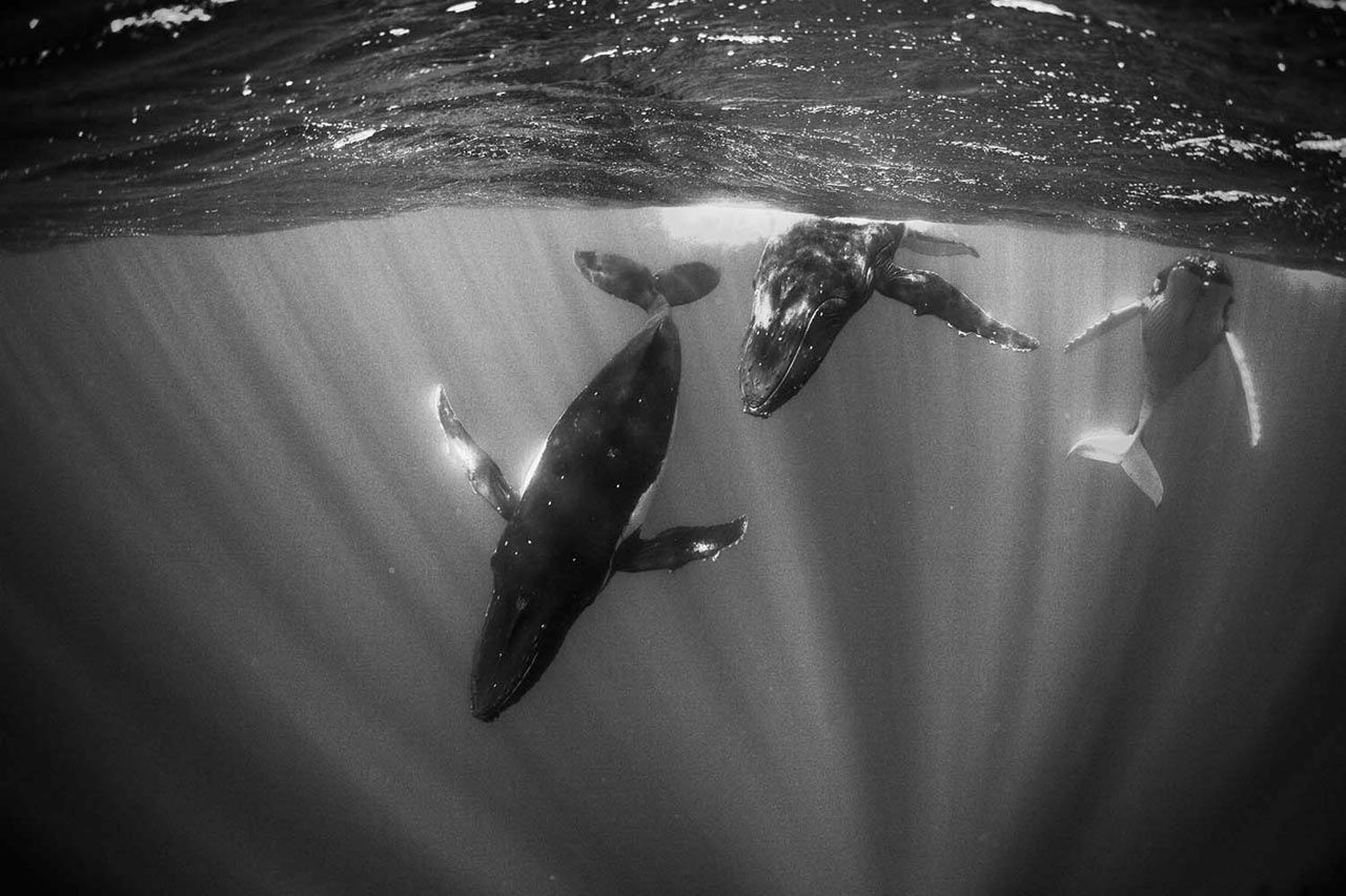 Friday Five with Karen Stonely of SPAN Architecture | Whale pictures, Humpback whale pictures, Whale