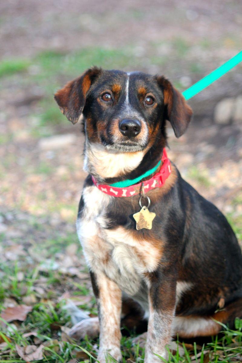 Bulldog Rescue Texas San Antonio