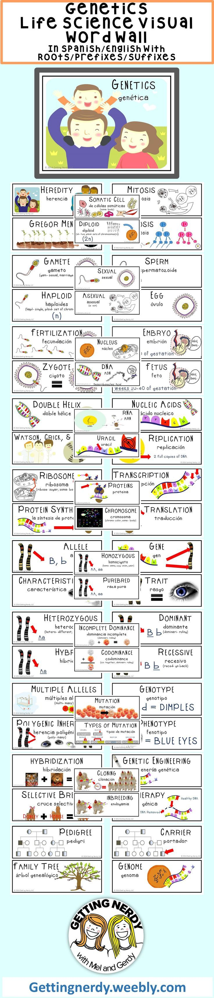 worksheet Genetics Vocabulary Worksheet genetics word wall students walls and vocabulary in science has improved since using this colorful wall