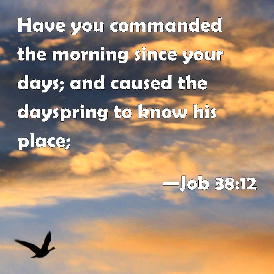 Job 3812 Have you commanded the morning since your days