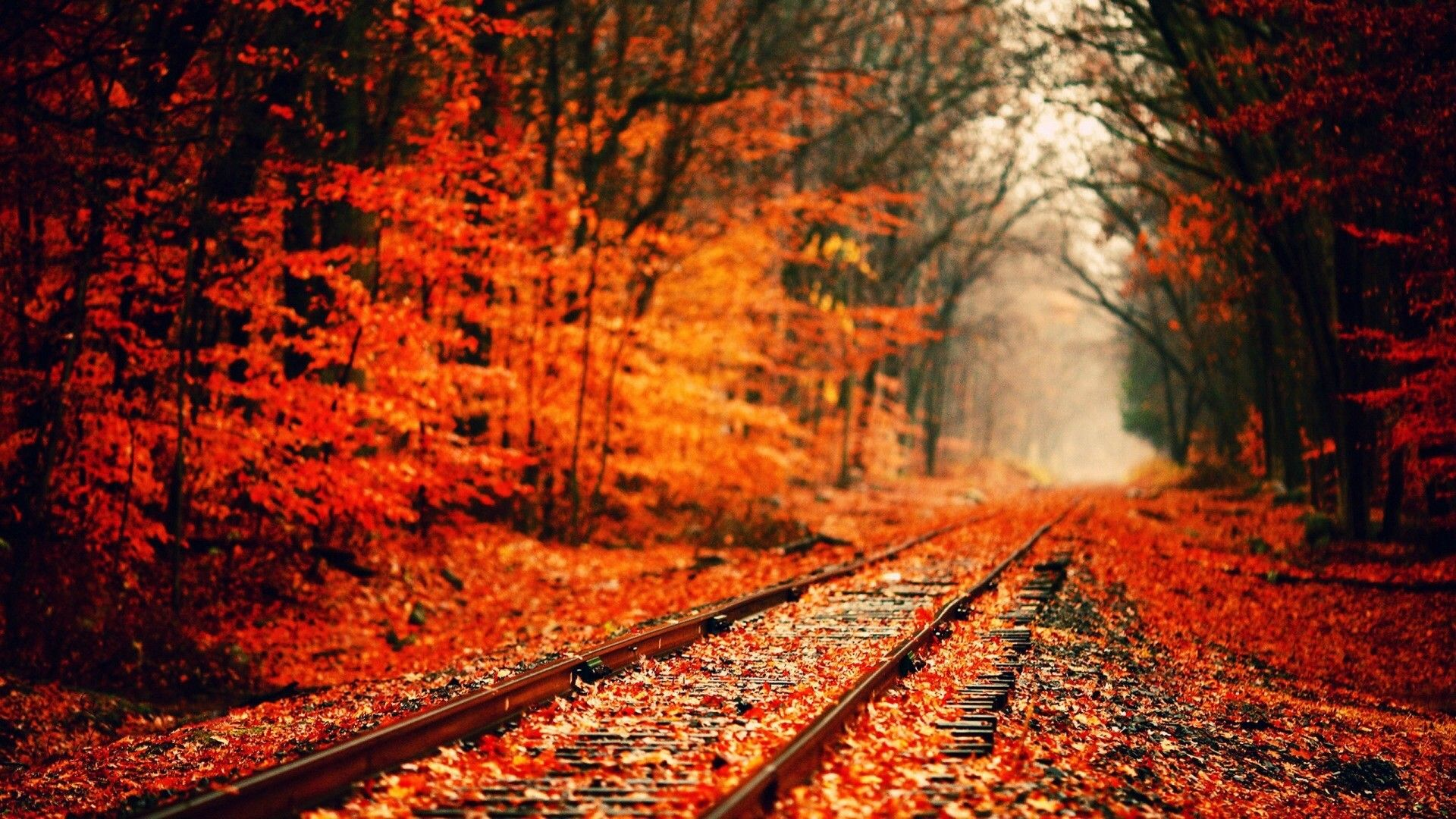 Hd 1080p Fall Wallpaper 79 Images: Full HD 1080p Autumn Wallpapers [OC] [1920 1080