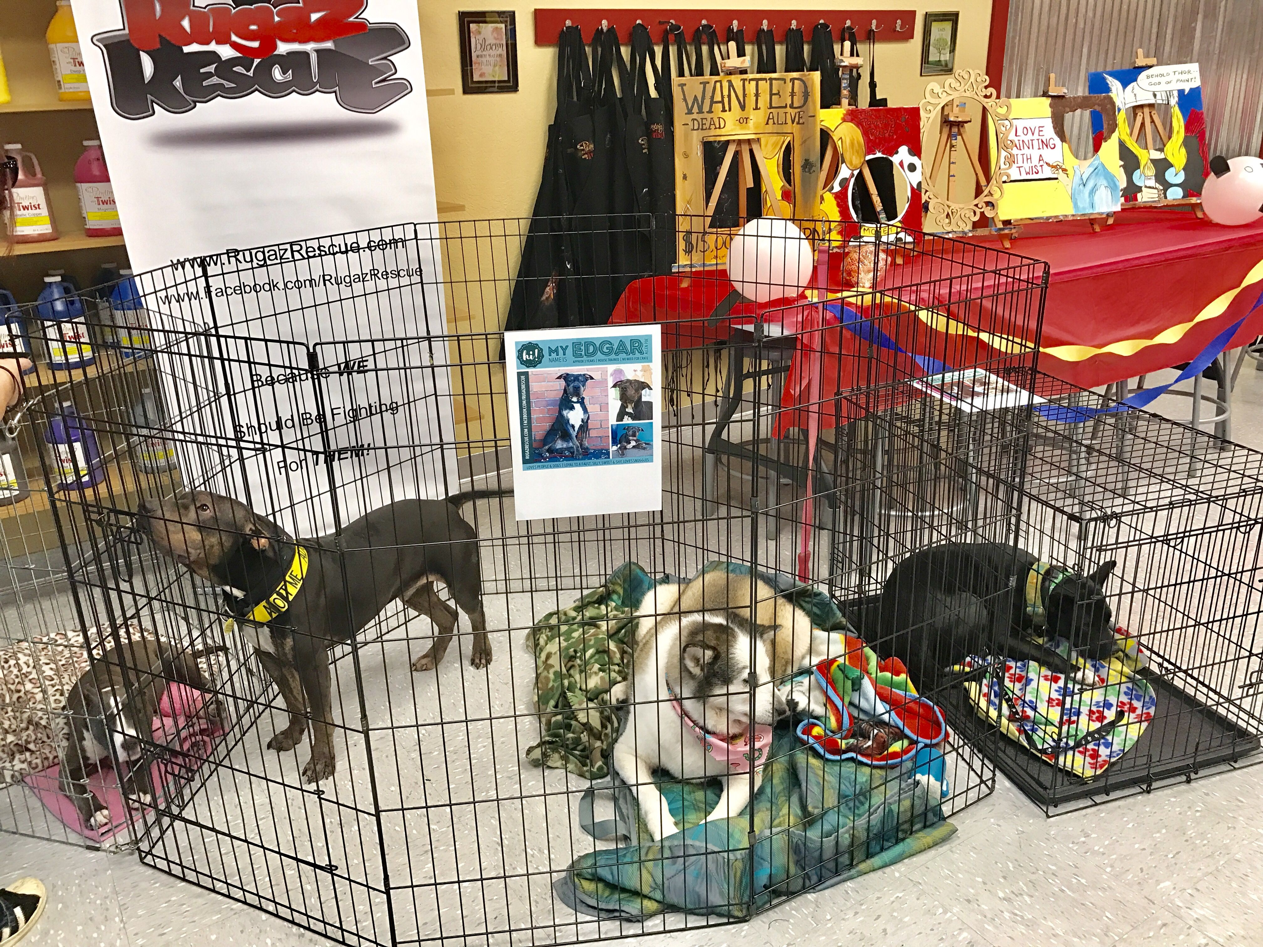 Paint Your Pet Adoption Event In Spring Hill Fl Adopt Rescue Dog Cat Springhill Cute Loveable Animals Ad Paint Your Pet Pet Adoption Event Love Pet