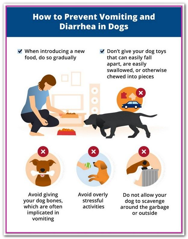 how to treat upset stomach and diarrhea in dogs