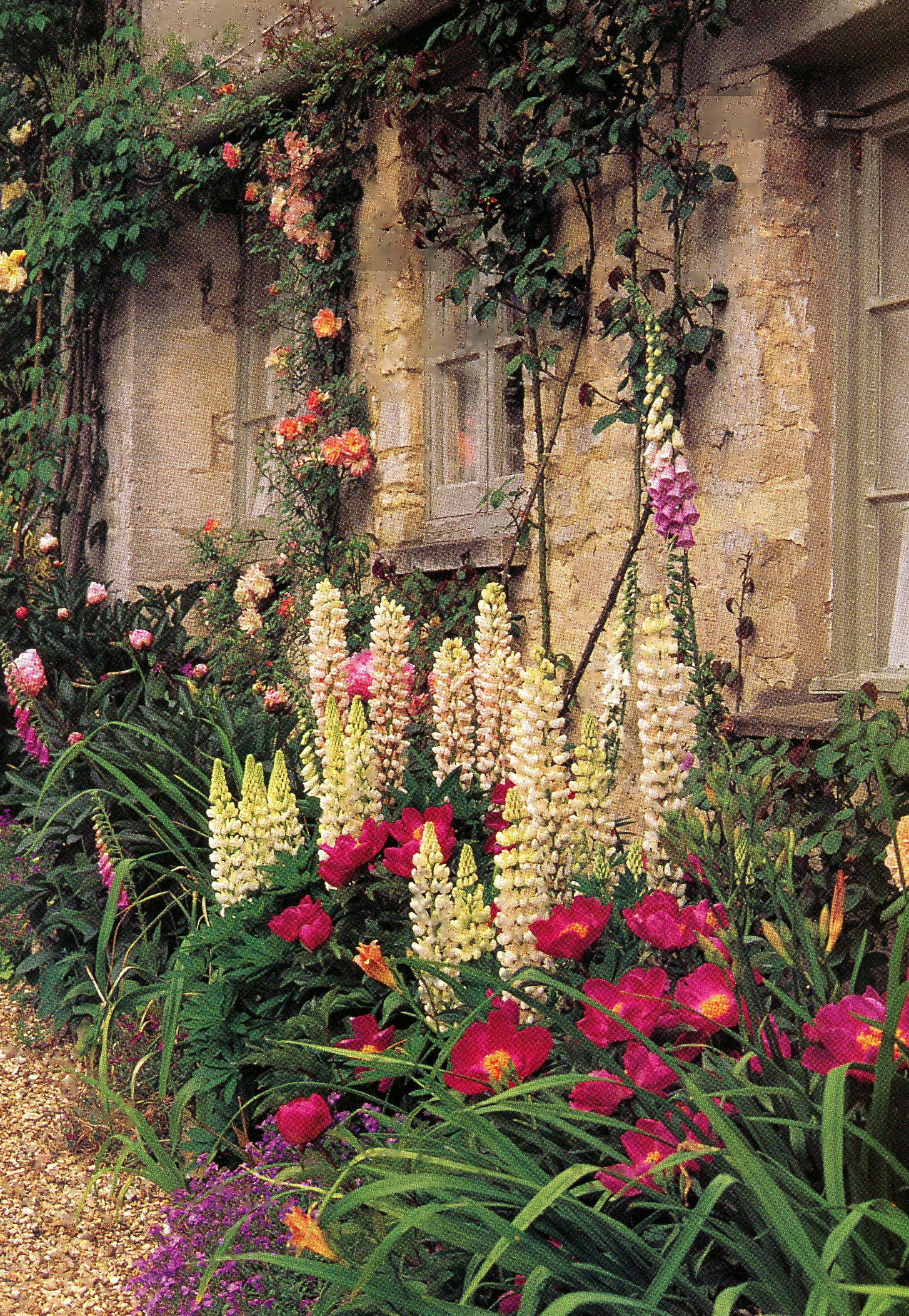Pin by Janet Lohman on Gardens, Landscape   Pinterest   Gated ...
