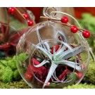 Holiday Hanging Globe Terrarium