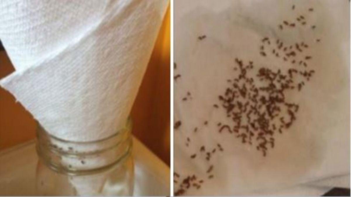 Comment Se Débarrasser Des Petite Mouche avec cette méthode, je n'ai plus jamais revu de mouche dans