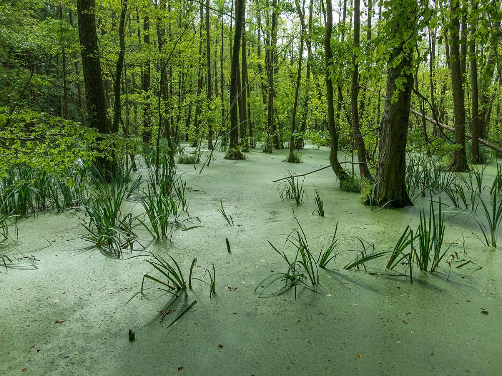 Grumsin - Forêts primaires et anciennes de hêtres des Carpates et d'autres régions d'Europe