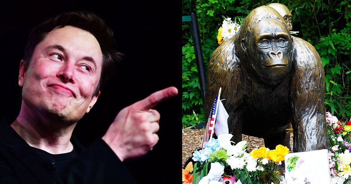 Elon Musk drops rap song 'RIP Harambe' Cat emoji
