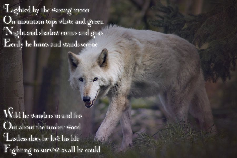 Lone Wolf Lone Wolf By Gorilla Ink Wolves Pinterest Wolf