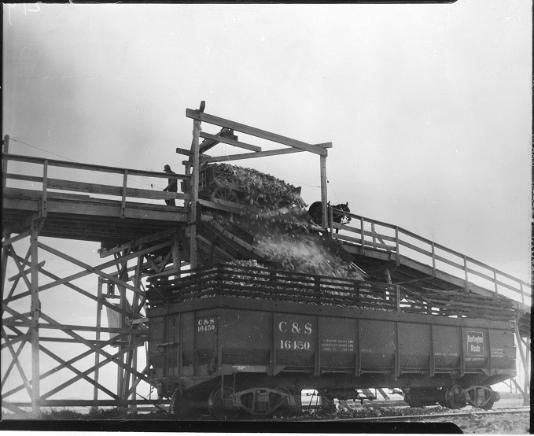 Loading railroad car. 1920? UHPC, University Archive, Archives and Special Collections, CSU, Fort Collins, CO