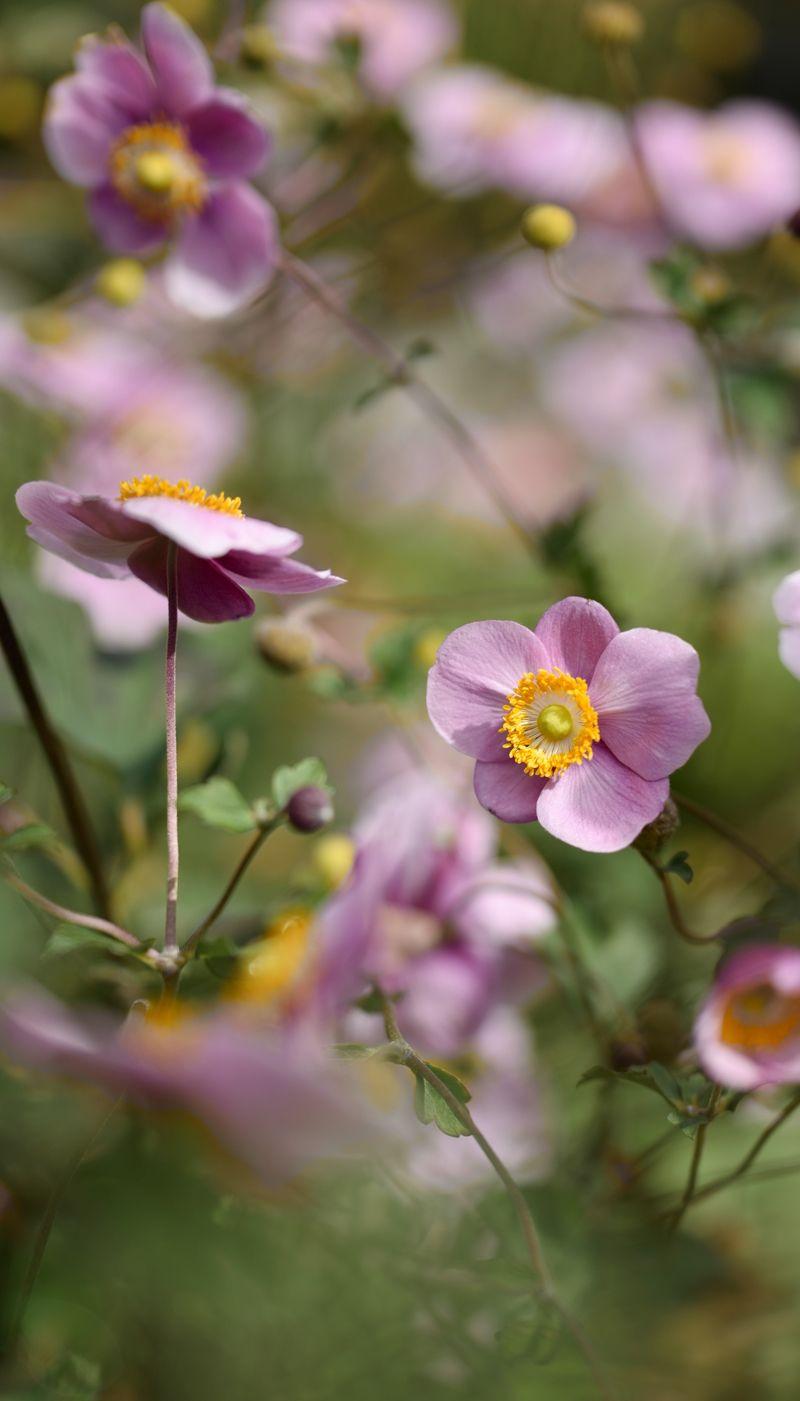 Die 9 Schönsten Blumen Für Den Herbst
