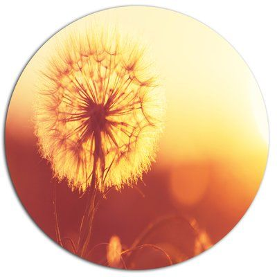 "DesignArt 'Blossom Dandelion Flower' Photographic Print on Metal Size: 11"" H x 11"" W x 1"" D"