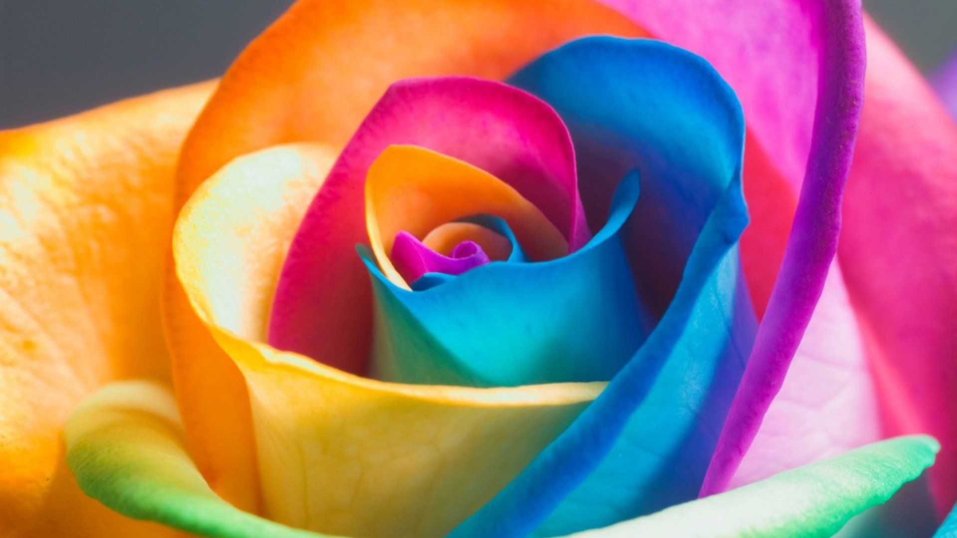 1920x1080 Colorful Flower Hd Wallpapers 1080p With Images