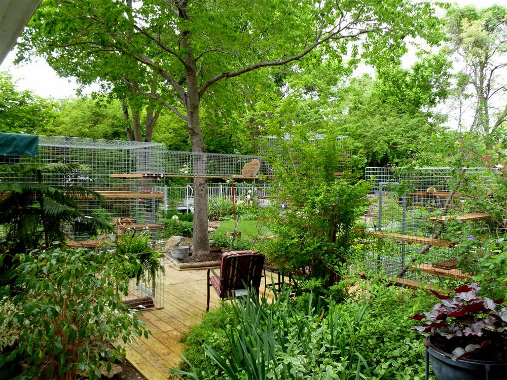 outdoor cat enclosure for pets pinterest katzenm bel paradies und katzen. Black Bedroom Furniture Sets. Home Design Ideas