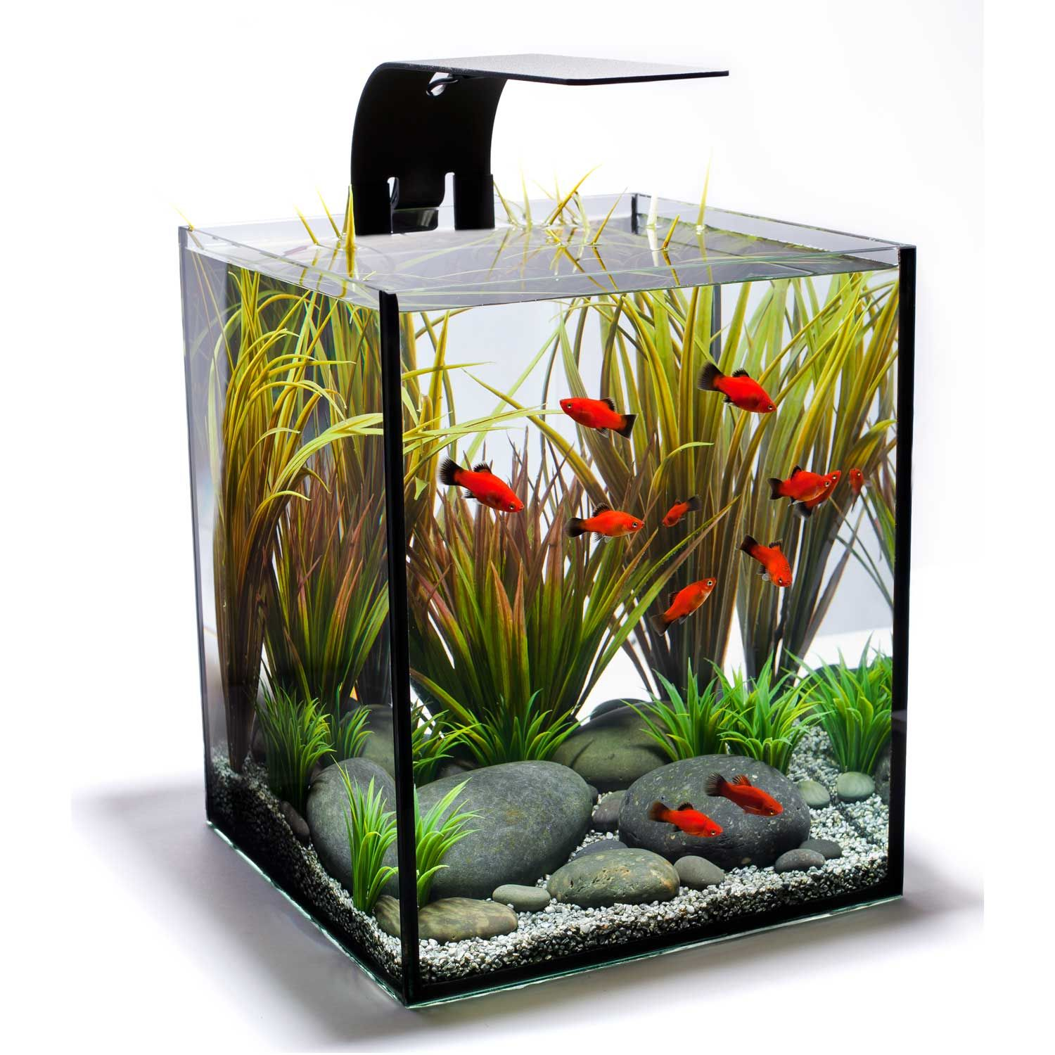 Interested In A Small, Easy To Maintain Aquarium Like This