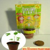 TickleMe Plant Birthday Party Favor o... $5.75
