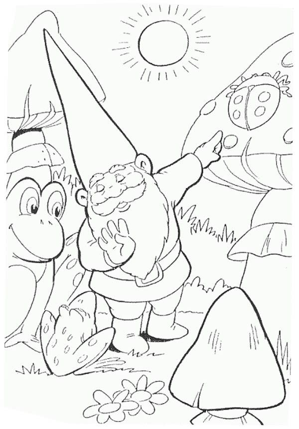 david the gnome, : David the Gnome Show to Frog a Giant