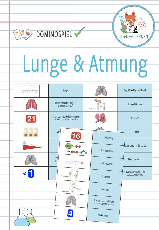 Lunge Atmung Domino Spiel Unterrichtsmaterial Im Fach Biologie Domino Spiele Lunge Domino