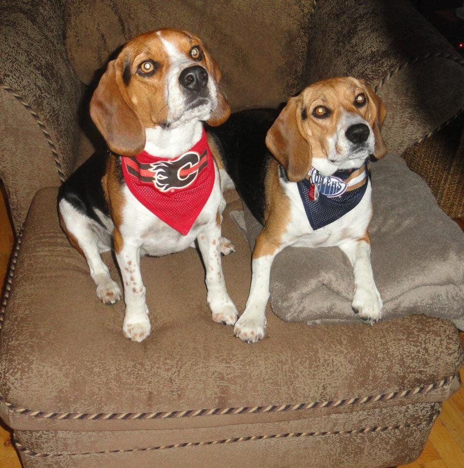 Thanks to Twitter follower @beaglebailey97 for sharing this Battle of Alberta! (Can they both win?) #hockeypets