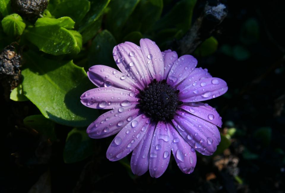 Free photo of rain flower in 2020 | No rain no flowers ...