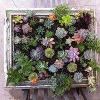 初めてでも安心だよ。多肉植物の育て方・寄せ植え・増やし方まとめ