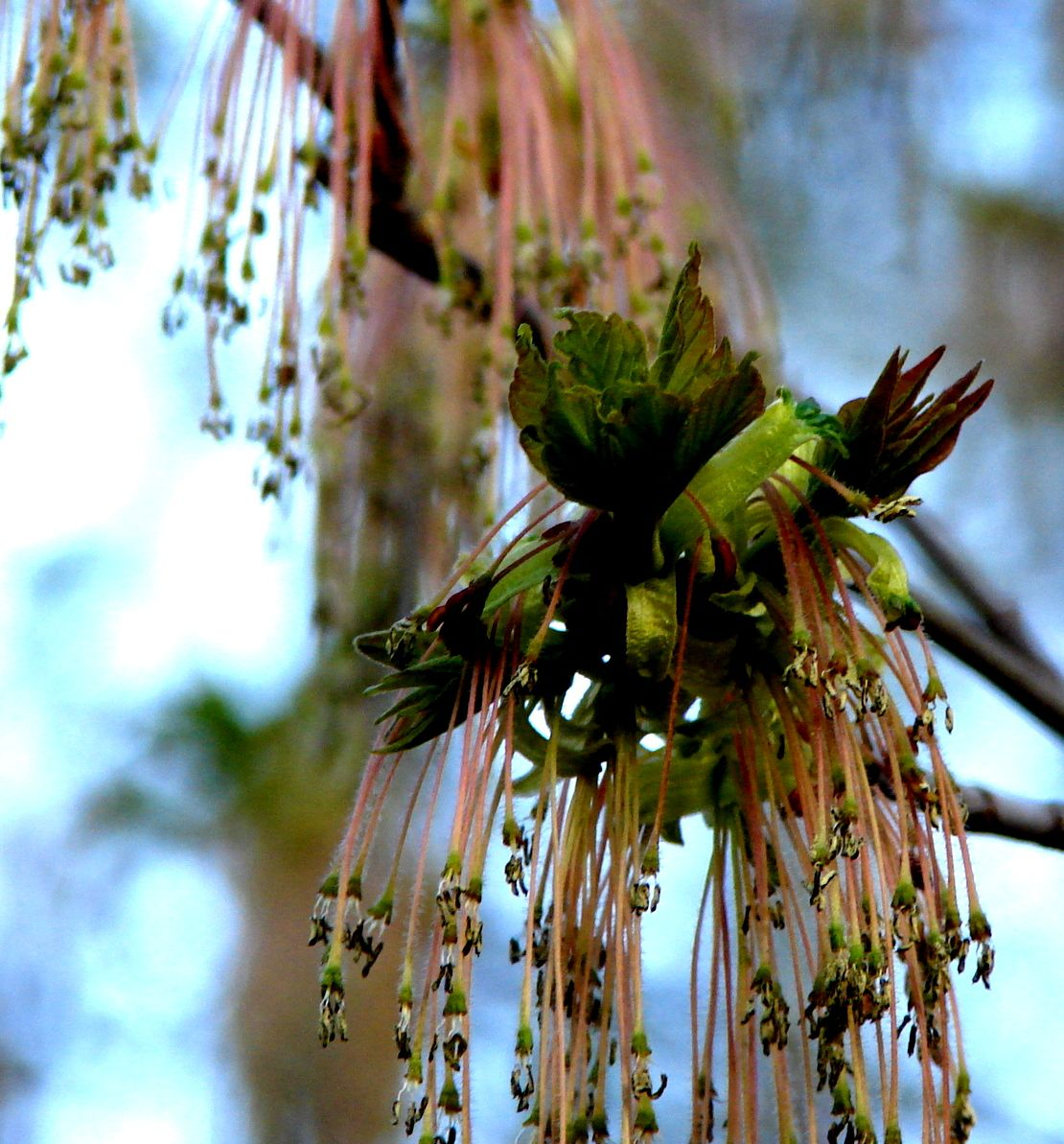 The flowers of trees can be amazingly exotic