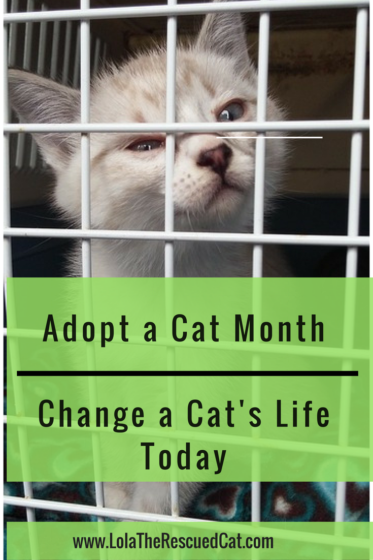 It S Adopt A Cat Month Change A Cat S Life Today Cat Life Cats Adoption