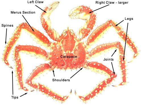 Crab Diagram Of Red - Auto Wiring Diagram Today •