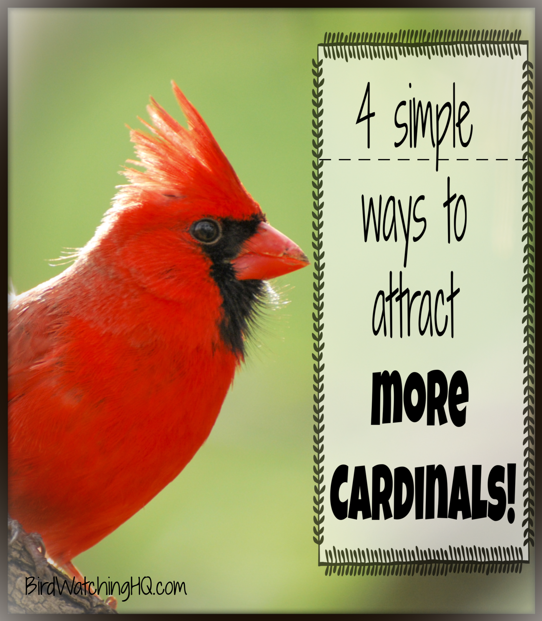4 Simple Strategies To Attract Cardinals To Your Feeders 2020 Bird Watching Hq Bird Aviary Backyard Birds Bird