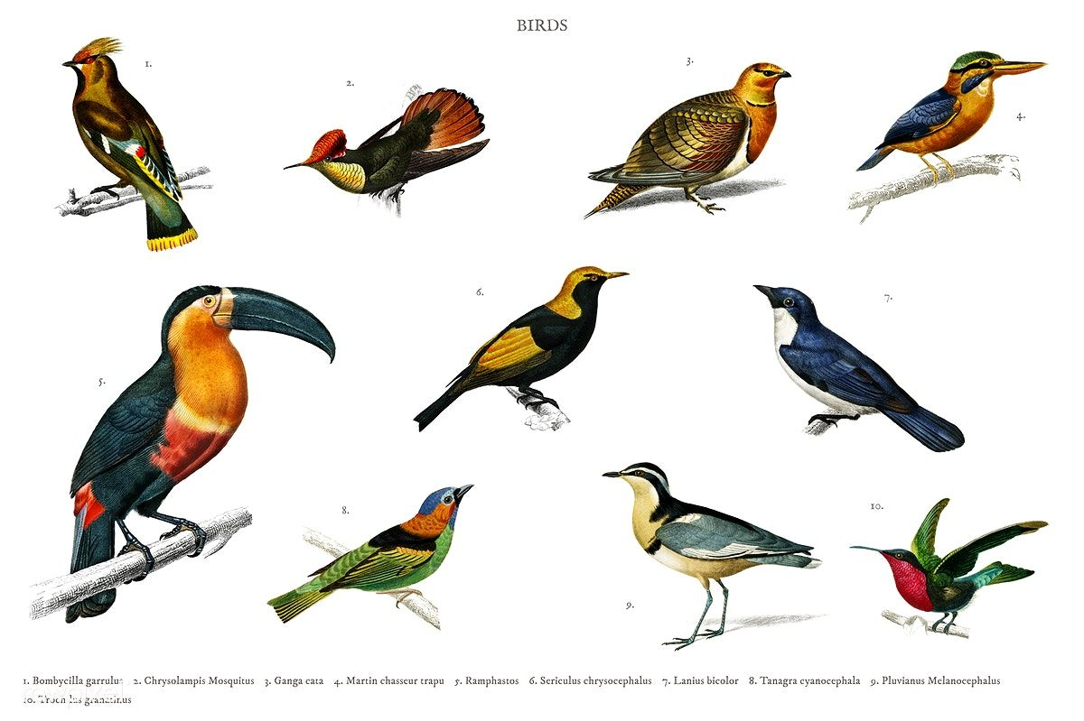 Download premium illustration of Different types of birds illustrated