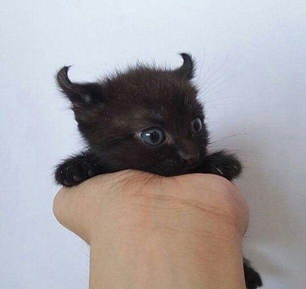 Connu 20 chatons trop mignons qui vont vous donner envie de caresser  DM85