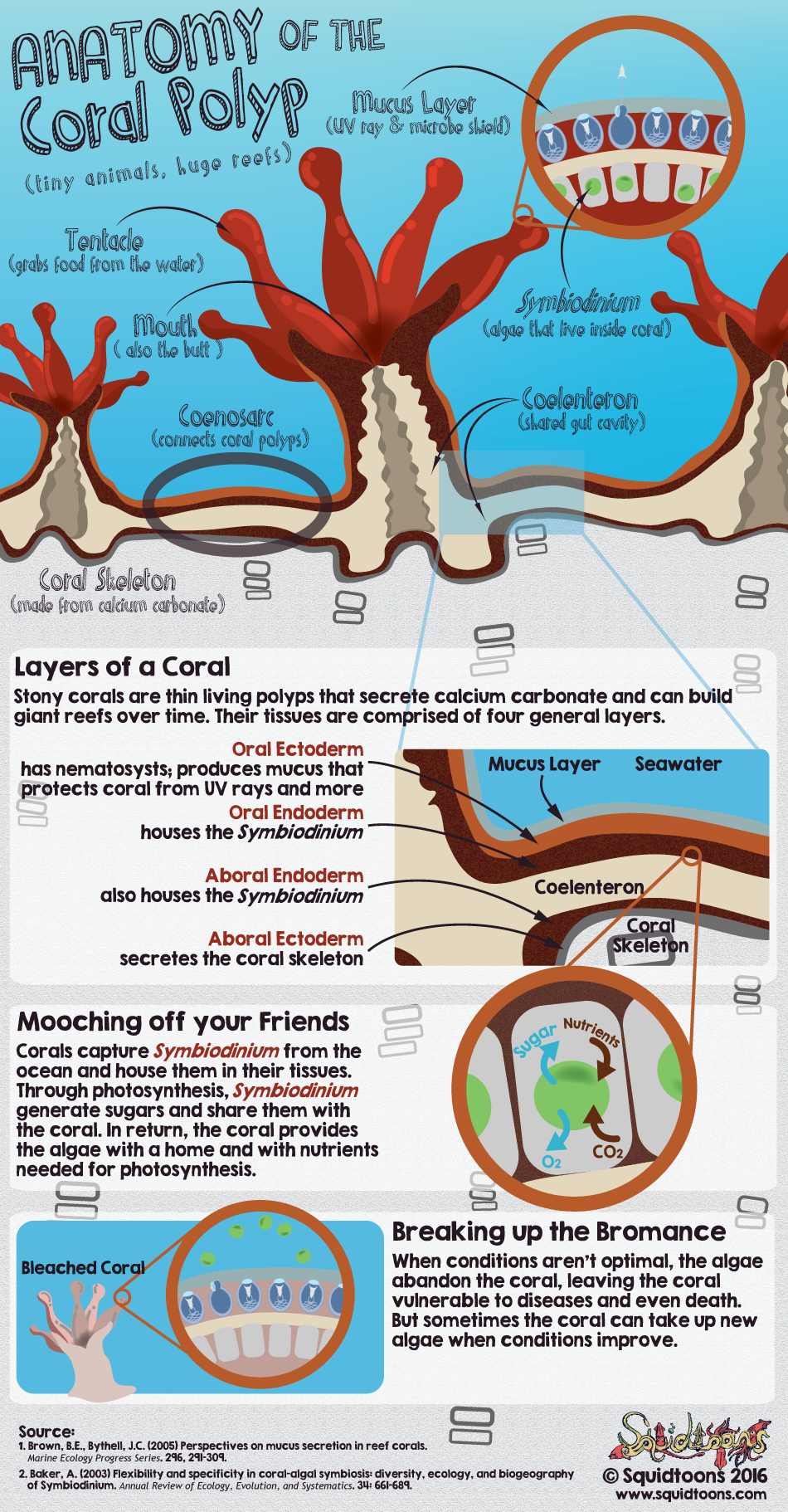Anatomy Of The Coral Polyp Marine Biology Comics Pinterest
