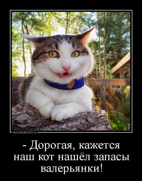 Новые демотиваторы-приколы (15 шт) Картинки с текстом # ...