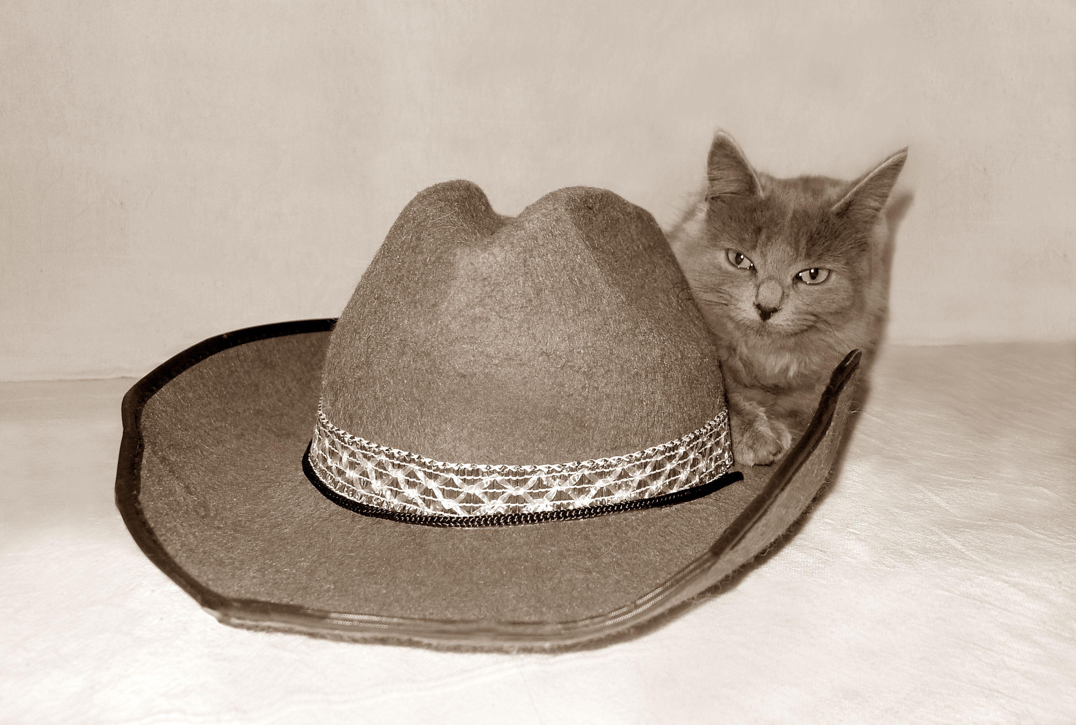 Cowgirl Chloe   Cowboy hats, Cowgirl, Cowboy