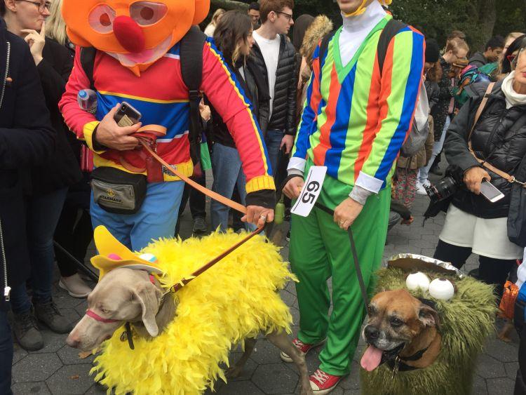 Halloween Dog Costume Contest Dog Halloween Costumes Dog