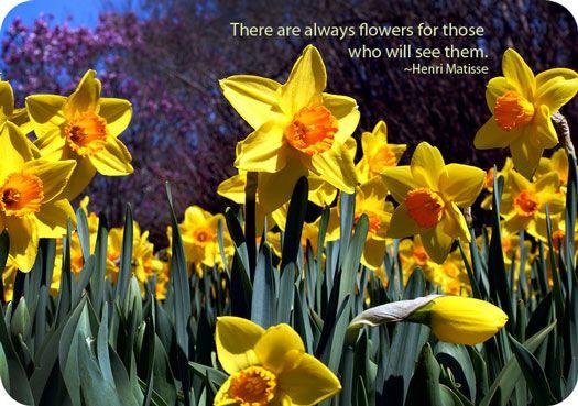 Symbolic Daffodil Meanings Daffodils Daffodil Flower Narcissus